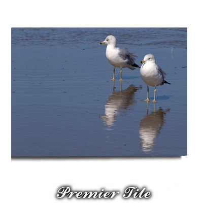 6x8 Premiere™ Ceramic Satin White Tile