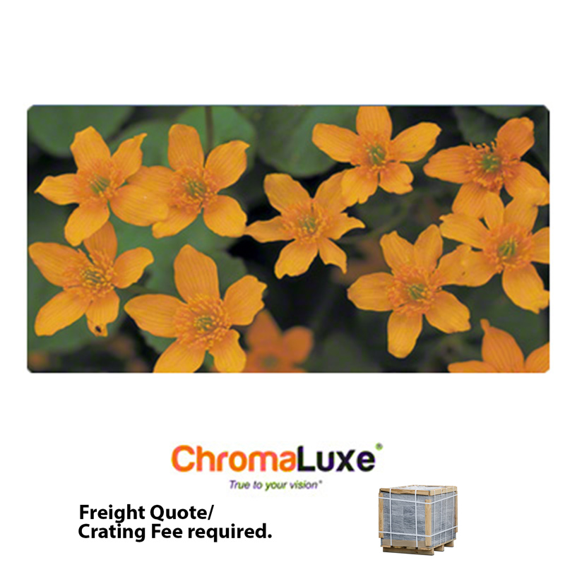 18x36 ChromaLuxe™ Matte Clear Aluminum Photo Panel